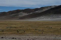 Montanhas bolivianas fotografia de stock royalty free
