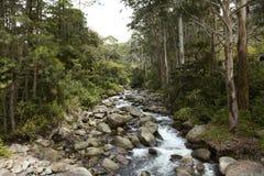 Montanhas, Boquete, Chiriqui, Panama2 Imagem de Stock