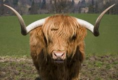 Montanhas Bull Imagem de Stock