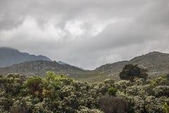Montanhas cênicos de Clarence Drive, entre a baía do ` s de Gordon e o Rooiels no cabo ocidental, África do Sul fotos de stock royalty free