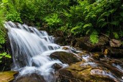 Montanhas Carpathian Córrego da montanha e grama verde no banco Fotos de Stock Royalty Free
