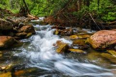 Montanhas Carpathian Córrego da montanha e grama verde no banco Fotografia de Stock