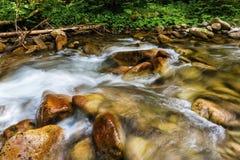 Montanhas Carpathian Córrego da montanha e grama verde no banco Foto de Stock