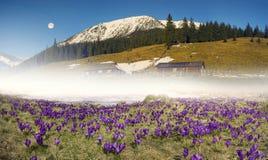 Montanhas Carpathian da exploração agrícola da flor Fotografia de Stock
