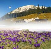 Montanhas Carpathian da exploração agrícola da flor Foto de Stock