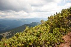 Montanhas Carpathian e floresta Imagem de Stock