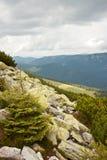 Montanhas Carpathian e floresta Fotos de Stock Royalty Free