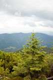 Montanhas Carpathian e floresta Imagens de Stock Royalty Free