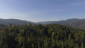 Montanhas Carpathian em Ucrânia 2018 video estoque