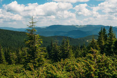 Montanhas Carpathian no verão Imagens de Stock Royalty Free