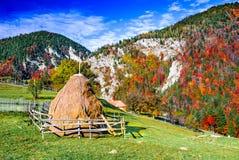 Montanhas Carpathian, paisagem do outono em Magura imagem de stock royalty free