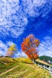 Montanhas Carpathian, paisagem do outono em Magura imagens de stock