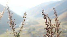 Montanhas da grama das flores filme