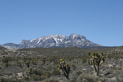 Montanhas da mola, Nevada foto de stock royalty free