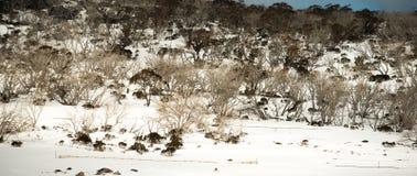 Montanhas da neve no parque nacional de Kosciuszko, Austrália Foto de Stock