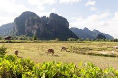 Montanhas da pedra calcária em Vang Vieng, cidade de estância turística popular em Laos imagens de stock