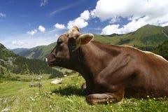 Montanhas da vaca Foto de Stock