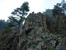 Montanhas das montanhas de Altai imagens de stock royalty free