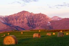 Montanhas de Alberta, campos, e pacotes de feno imagem de stock royalty free