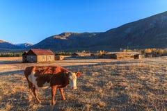 Montanhas de Altai Fotos de Stock