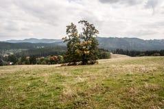 Montanhas de Autumn Moravskoslezske Beskydy perto de Vysni Mohelnice na república checa Fotos de Stock