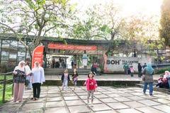 MONTANHAS DE CAMERON, MALÁSIA, O 6 DE ABRIL DE 2019: Turista que faz sua maneira ao centro do chá de BOH Sungai Palas, ponto popu imagem de stock royalty free