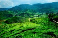 Montanhas de Cameron, malaysia imagens de stock royalty free