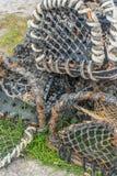 Montanhas de Escócia dos potenciômetros de pesca foto de stock