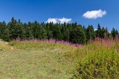 Montanhas de Ilgaz Imagens de Stock Royalty Free