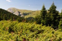 Montanhas de Ilgaz Fotografia de Stock Royalty Free