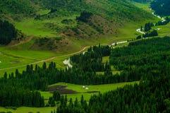 Montanhas de Karacol, rio, árvores, verão Fotos de Stock Royalty Free