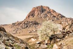 Montanhas de Macin Fotos de Stock