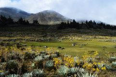 Montanhas de MucubajÃ, MucuchÃes, Los Andes, Venezuela imagens de stock
