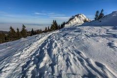 Montanhas de Postavaru no inverno, Romênia Imagem de Stock