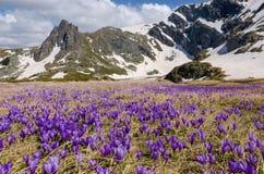Montanhas de Rila Imagem de Stock Royalty Free