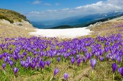 Montanhas de Rila Fotografia de Stock Royalty Free
