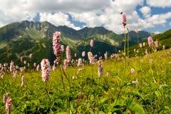 Montanhas de Rohace em Slovakia Fotos de Stock