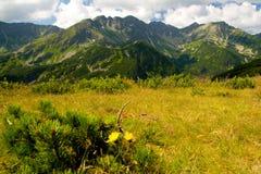 Montanhas de Rohace em Slovakia Imagens de Stock