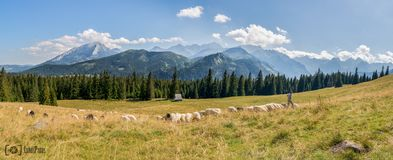 Montanhas de Tatra no Polônia fotografia de stock royalty free