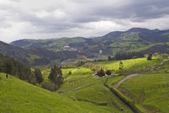 Montanhas de Vasc Imagem de Stock Royalty Free