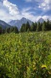 Montanhas de Wyoming acima de um campo imagem de stock