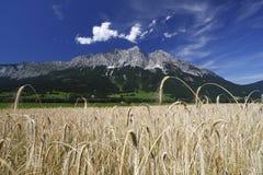 Montanhas do campo Foto de Stock Royalty Free