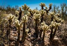Montanhas do deserto do Arizona Foto de Stock Royalty Free