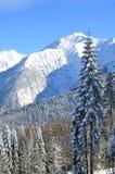 Montanhas do inverno Foto de Stock Royalty Free
