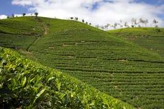 Montanhas do jardim de chá de Sri Lanka Fotografia de Stock