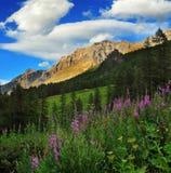 Montanhas do parque nacional de Gran Paradiso com ervas do salgueiro Foto de Stock