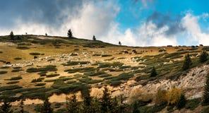 Montanhas do Sar - Sar Planina, Macedônia - rebanho misturado do ovino e do gado imagens de stock royalty free