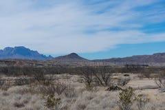 Montanhas e árvore no deserto Imagens de Stock