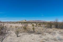 Montanhas e árvore no deserto Imagem de Stock
