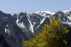 Montanhas e árvores Imagem de Stock